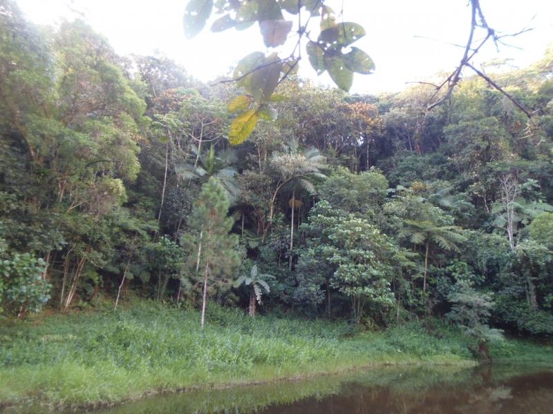 Guabiruba - Lageado Alto
